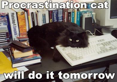 procrastination-cat